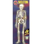 Airfix Skeleton model kit