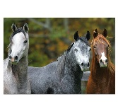Educa Jigsaw Puzzle - Arabian Horses - 1000 pieces