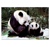 Educa Jigsaw Puzzle - Panda Bears - 1000 pieces